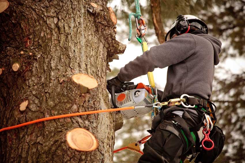 Arborist Perth - Tree Wise Men Perth