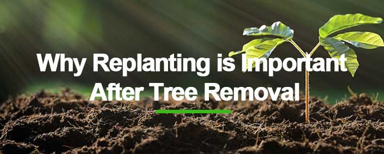 Why replanting a tree is important - Blog Single Image