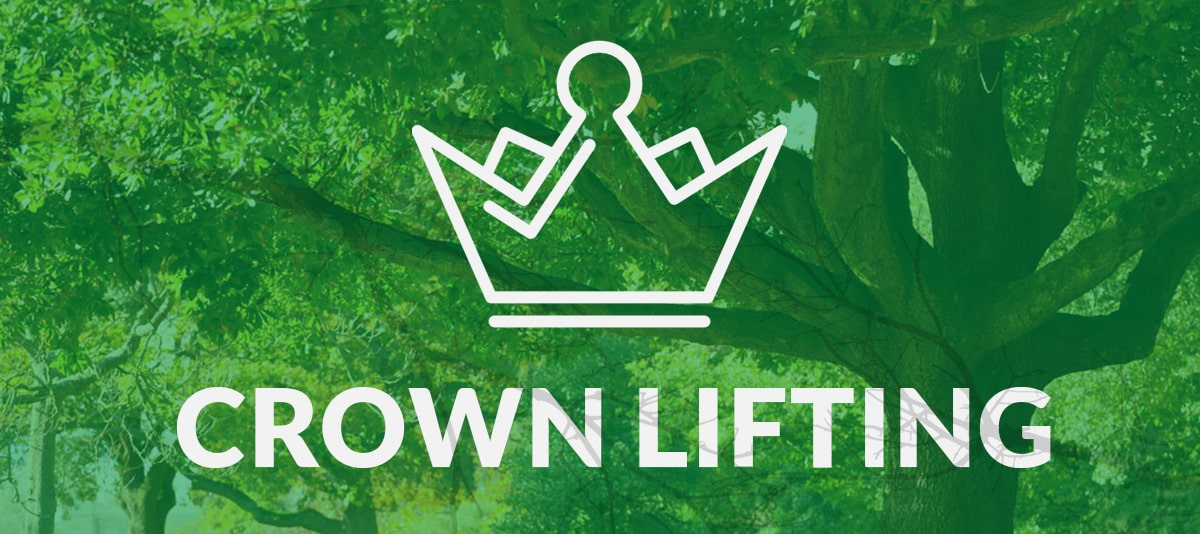 Crown Lift Tree Services Perth